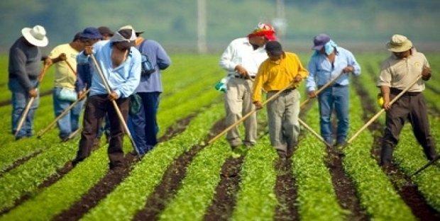 Aggiornate le aliquote per i contributi INPS 2020 per gli operai agricoli