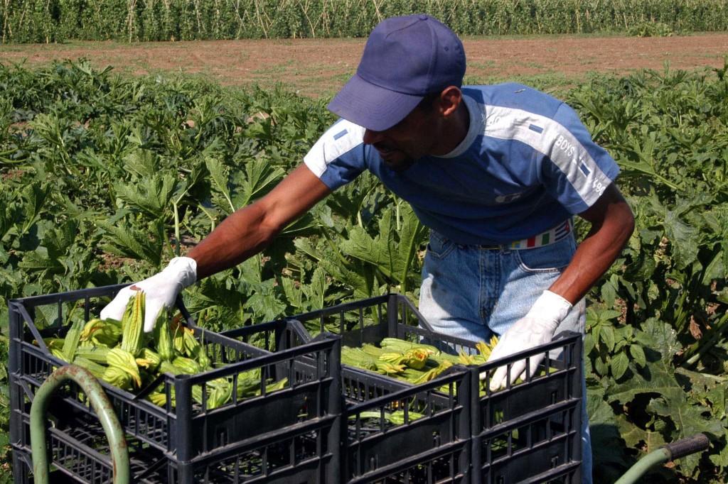 L'INPS comunica le aliquote contributive per gli operai agricoli