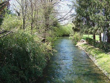 Colture azotofissatrici nel greening: occhio alle distanze
