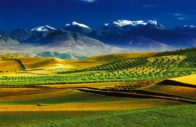 Il 15 giugno è stato approvato alla Camera il Decreto Agricoltura: ecco alcune possibili novità