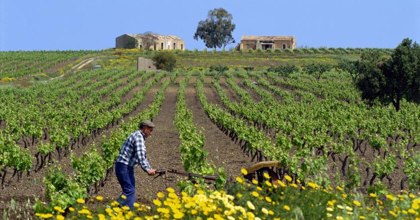Dalla Legge di Bilancio 2019 l'equiparazione dei familiari coadiuvanti al coltivatore diretto
