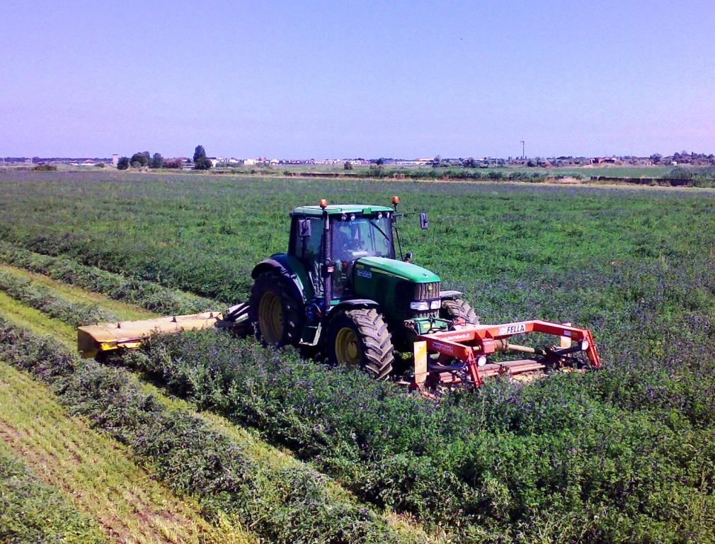 Erba medica: dal 2016 novità per le aziende agricole che la coltivino