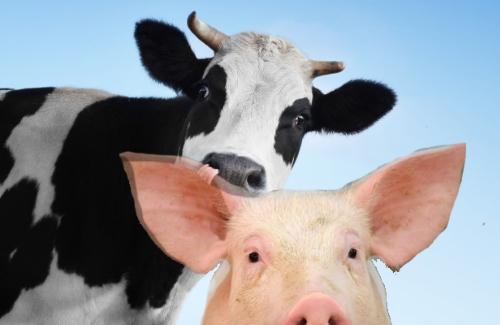 Legge di bilancio 2021: proroga delle percentuali di compensazione IVA per bovini e suini