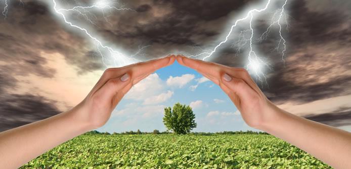 Assicurazioni vegetali 2017: al via le domande di sostegno