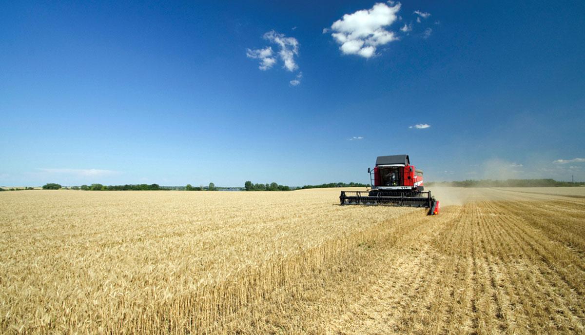 Regime dei piccoli agricoltori: chiarimenti da AGEA