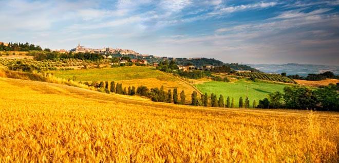 Approvati dalla Regione Piemonte nuovi bandi PSR