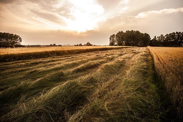 Il Piemonte apre il bando Giovani Agricoltori 2017: insediamento e miglioramento