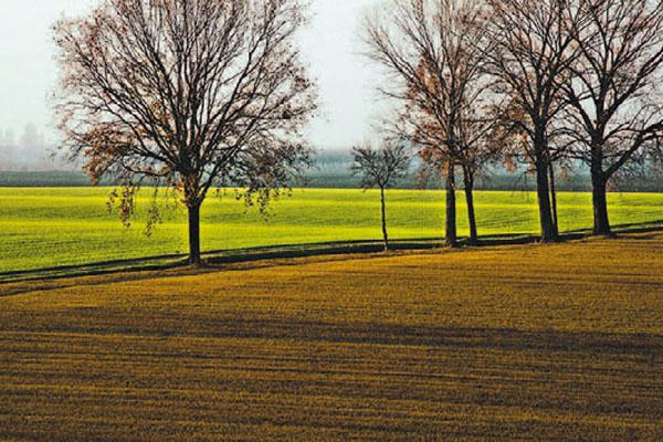 Agevolazioni IRPEF in agricoltura: i primi chiarimenti ed alcuni nodi ancora irrisolti