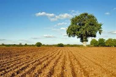 Ultime novità sul calcolo titoli PAC campagna 2016 e greening 2016