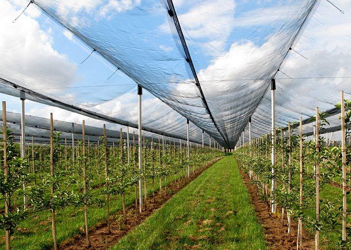 Domande di contributo per reti antigrandine: il Piemonte proroga